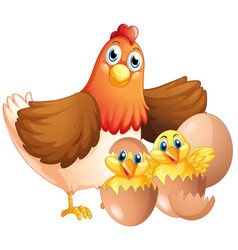 Mother hen and two chicks vector