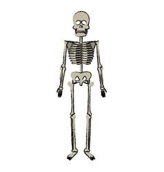 Skeleton human bones skull body medicine vector