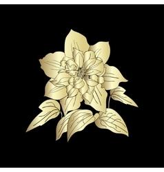 Terry flower clematis sketch vector image