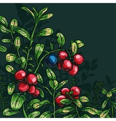 Bush cowberry vector