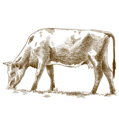 Engraving of cow vector