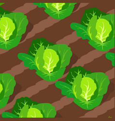 Pattern with cabbages growing on beds vector
