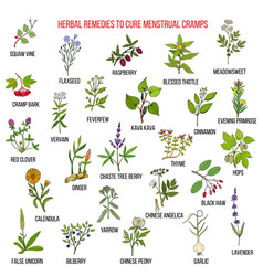 Best herbs for menstrual cramps treatment vector