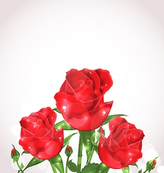 Three roses for design wedding card vector image