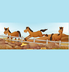Three horses in the field vector