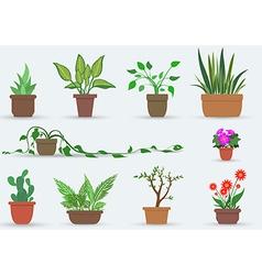 House plants vector