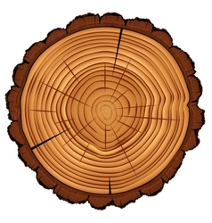 Cross section of tree stump isolated on white vector image vector image