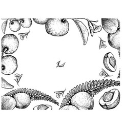 Hand drawn frame of indian gooseberry and tallow p vector