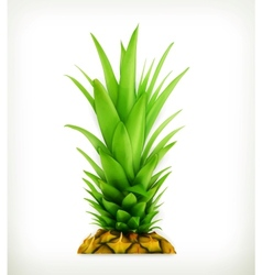 Pineapple top vector image