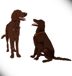 Two cute dogs vector