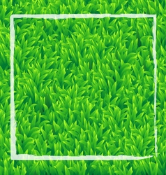Realistic green grass background vector