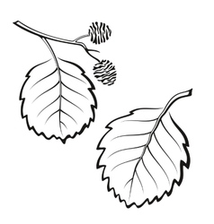 Alder Leaves Pictogram Set vector image vector image
