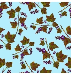 pattern with black currantberries vector image