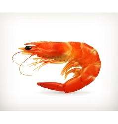 Shrimp vector image