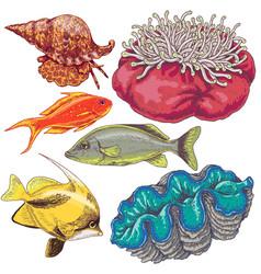 Reef animals set vector
