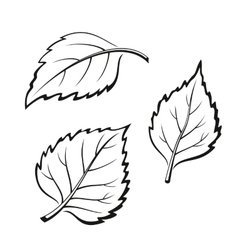 Birch Leaves Pictogram Set vector image