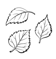 Birch leaves pictogram set vector