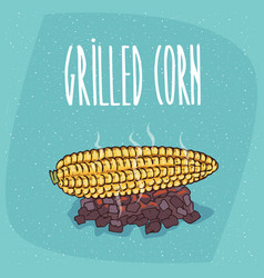 Isolated grilled over charcoal corn ears vector
