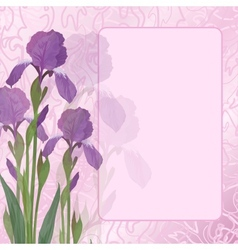 flowers iris on pink background vector image
