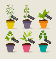 Herb garden with pots of herbs set 3 vector