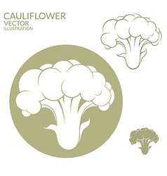 Cauliflower vector image