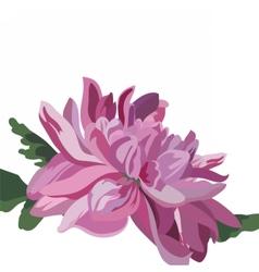 Chrysanthemum flower isolated vector