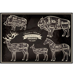 Diagram cut carcasses of boar bison deer horse vector