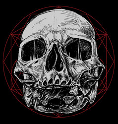 skull and sacred geometry symbol vector image vector image