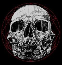 Skull and sacred geometry symbol vector