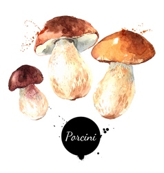 Watercolor hand drawn wild forest mushrooms vector