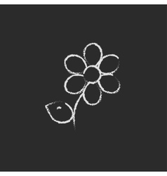 Flower icon drawn in chalk vector image