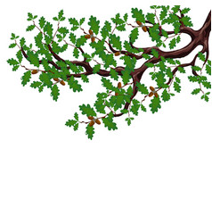 A green branch of a large oak tree with acorns vector