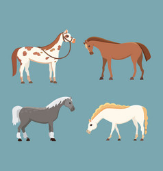 cute horses in various poses design vector image