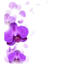 Purple orchid vector