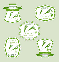 the green onion vector image