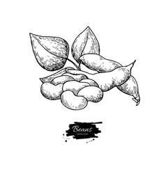White bean plant hand drawn vector