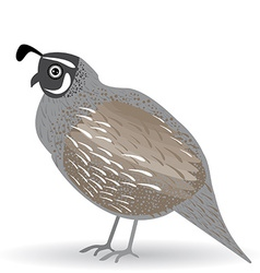 Funny quail on a white background vector image