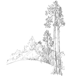 Pine trees and forest vector