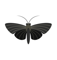 Butterfly with small wings icon flat style vector