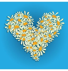 Heart flowers camomile vector image