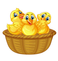 Three little chicks in basket vector