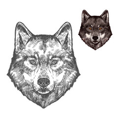 wolf muzzle isolated sketch animal vector image vector image