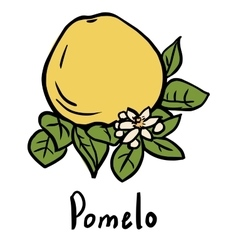 Pomelo fruit vector