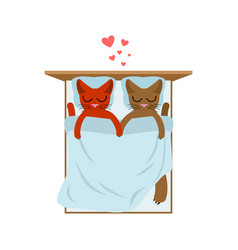 Cat lovers in bed lover in bedroom pet romantic vector