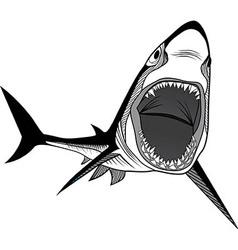 Shark fish head symbol for mascot vector