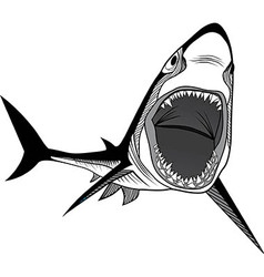Shark fish head symbol for mascot vector image vector image