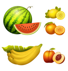 Ripe striped watermelon realistic juicy fruits vector