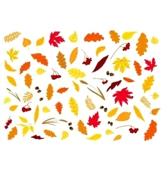 Autumnal leaves herbs acorns and berries vector image