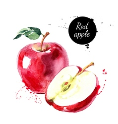 Watercolor hand drawn red apple Isolated eco vector image
