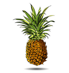 A pineapple isolated on a vector